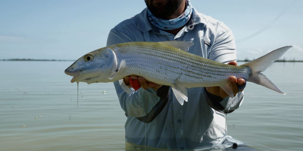 Bonefish Ascension Bay